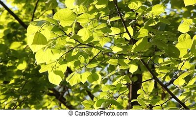 leaves, зеленый