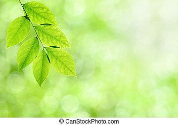leaves, зеленый, задний план, природа