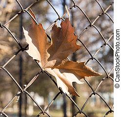 leaves, провод, забор