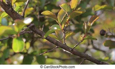 leaves, прут