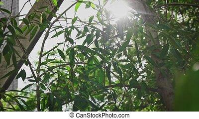leaves, солнце, мигающий, ива
