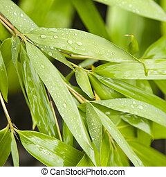 leaves., 竹