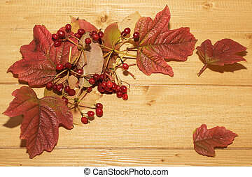 leaves and berries of viburnum on a wooden table.