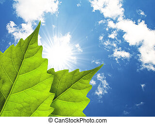 Leaves and cloudy sky, and sun