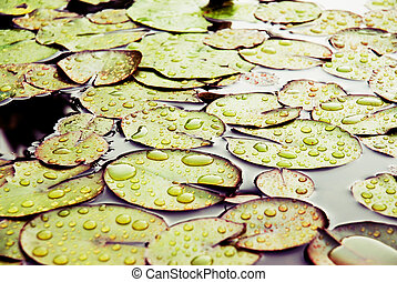 Leaves and drops of water