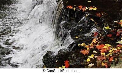 Leaves and Falling Water Loop