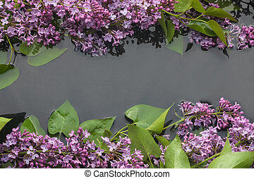 Leaves and flowers lilac in water