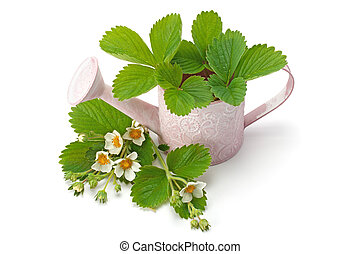 leaves and flowers of strawberry