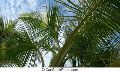 Leaves and Fronds of a Tropical Palm Tree against the Sky