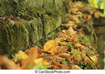 leaves and moss on a wall