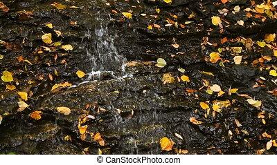 Leaves and Trickling Water Loop