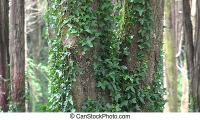 Leaves And Vine Plants On Tree