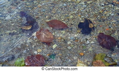 Leaves at the autumn drifting under water. - Closeup of...