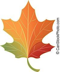 Leaves Autumn Color Change