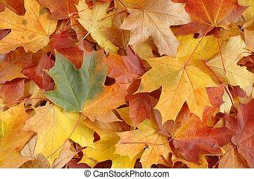 Leaves - Autumn leaves