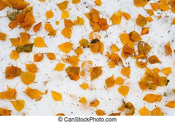 Leaves autumn snow texture