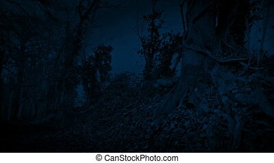 Leaves Blow Around Woodland Path At Night - Woodland path...