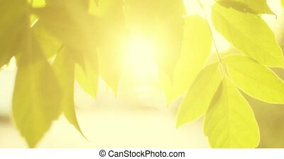 Leaves border and sunflares. Backlit shot of tree leaves moving in the wind slow