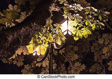 Leaves chestnut in the light of lantern