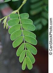 leaves closeup detail nature