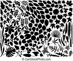 Leaves - Collection of hundreds of leaf outlines