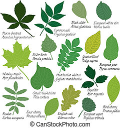Leaves collection with names - Collection of different...
