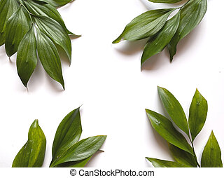 Leaves composition. Frame made of green leaves on white background. Wedding day, mothers day and womens day concept. Flat lay, top view.