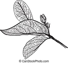 Leaves contours on a white background.