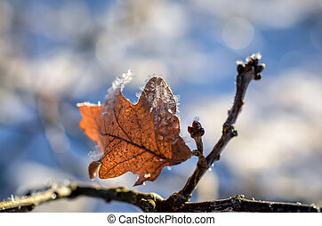 leaves covered with ice crystals in winter