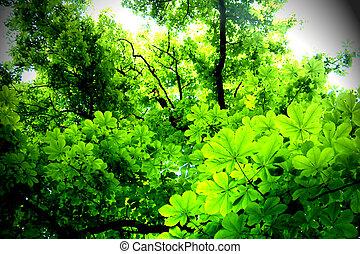 Leaves - Digital photo of light falling into leaves