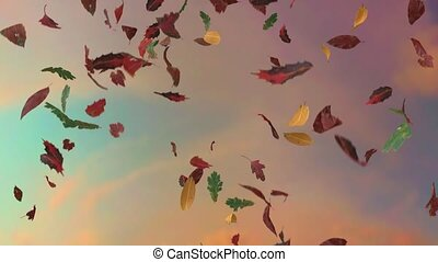 Leaves fall autumn falling seasons thanksgiving trees leaf...