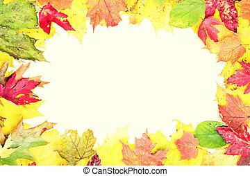 Leaves fall frame