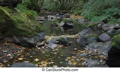 Leaves Fall Oregon Stream Water Runoff Deciduous Forest -...
