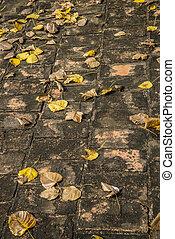 Leaves falled on the brick floor