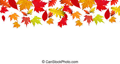 leaves falling autumn background