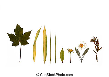 Leaves, Flowers and Herbs of Autumn.