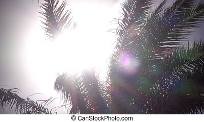 Leaves from a palm tree to sway in the wind a bright light...