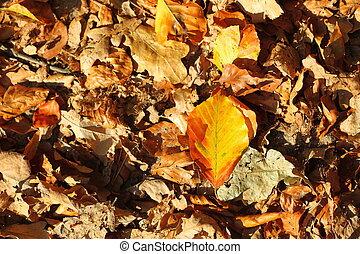 leaves, golden autumn
