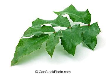 Green leaves isolated on white background. Laub auf wei�em Grund isoliert.