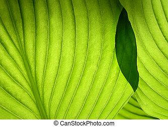 Green overlaping leaves