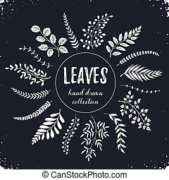 leaves hand drawn - Hand drawn branches collection. Set of...
