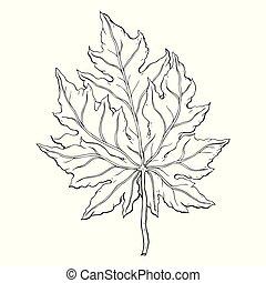 leaves. Hand Drawn Vector illustration