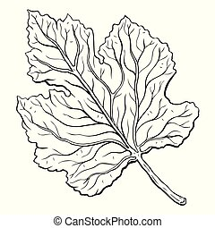 leaves. Hand Drawn Vector illustration