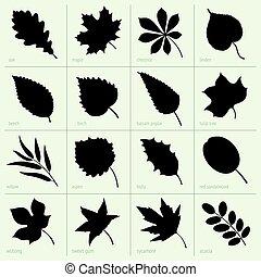 Leaves - Set of leaves