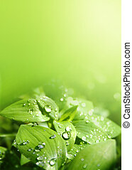light green leaves in the sunlight after rainshower