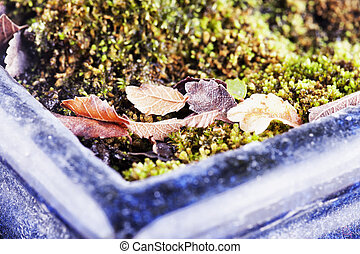 Leaves in a vase