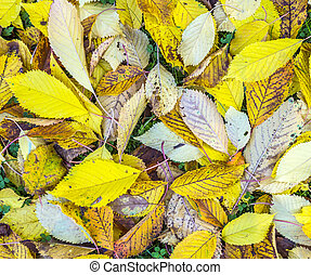 leaves in autumn color at the grass