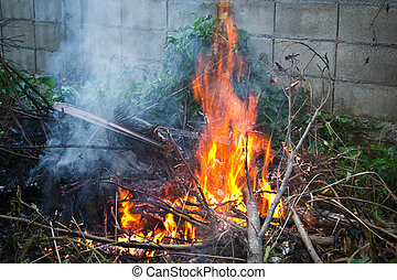 Leaves in fire