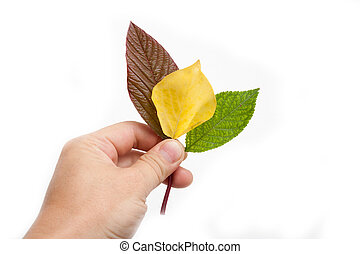 leaves in his hand on a white background
