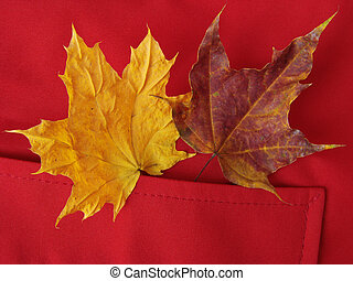 leaves in pocket